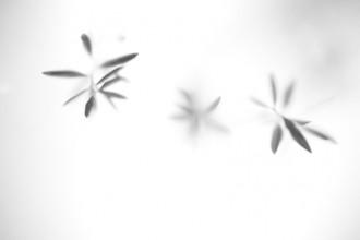 por-experimental-blackandwhite-fineart-fineartphotography-photography
